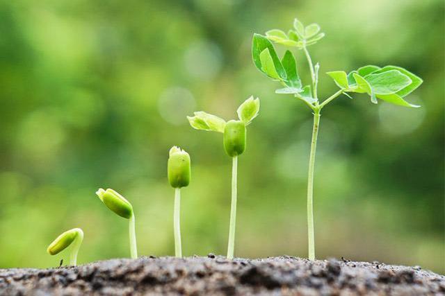 Brasil participa de descoberta inédita sobre mecanismo de defesa de plantas